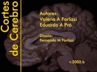 Cortes de Cerebro.pdf